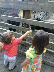 Eleanor Sebastian_little farm