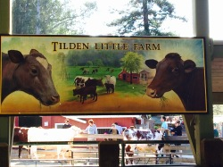 Tilden Little Farm