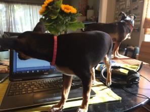 "Dynamic duo helping me ""work"""