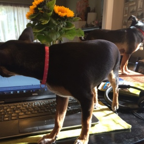 "Dynamic duo helping me ""work"""