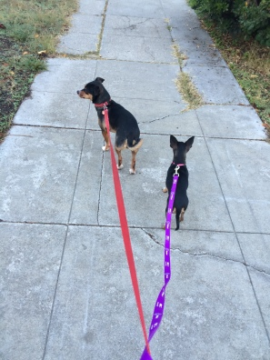 Out on a walk