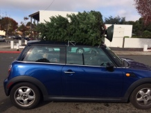 Mini sleigh ride home from picking our tree