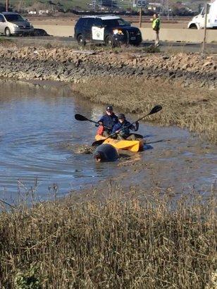 Marine mammal volunteers steer mom back to the water 3