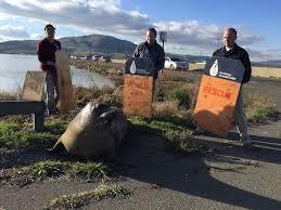 Marine mammal volunteers steer mom back to the water 5