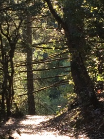 Mt Tam hike
