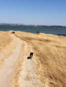 as usual, Bodhi leads the way