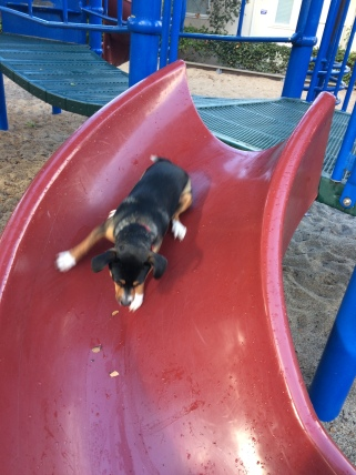 He loves the playground slide