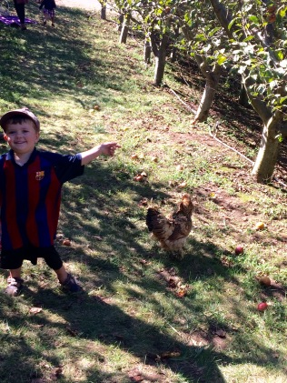 Chicken chase!
